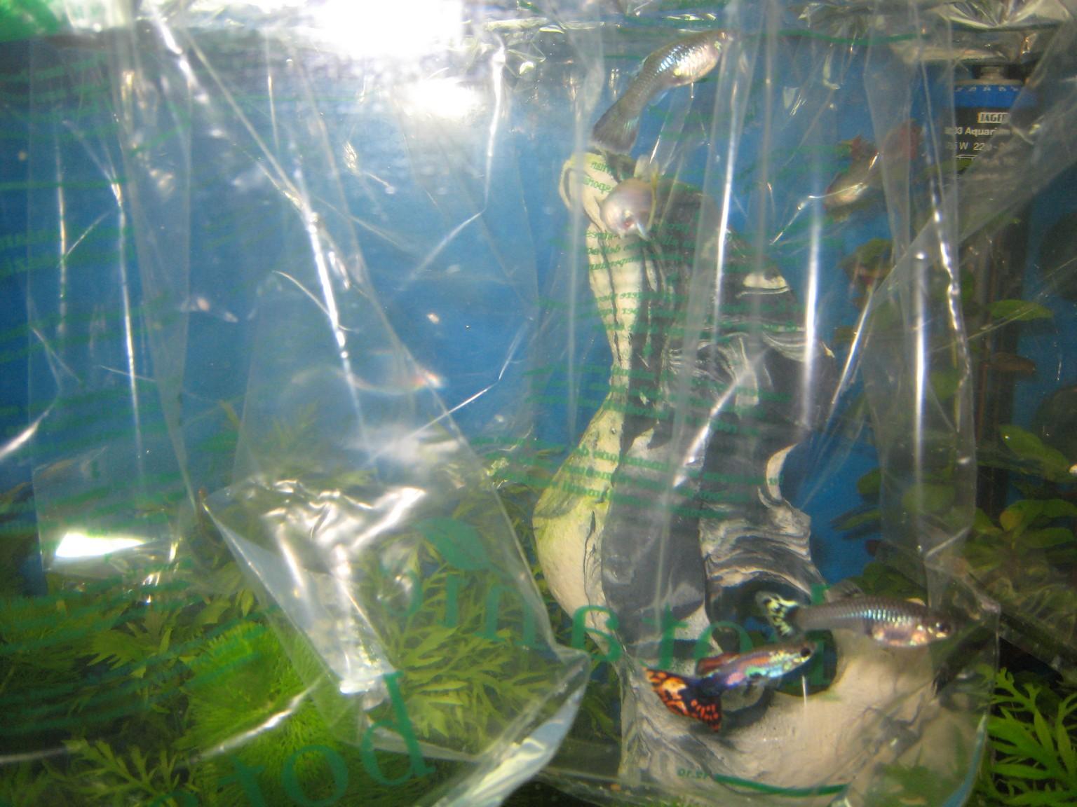 Mon aquarium les poissons - Poisson a ventouse ...