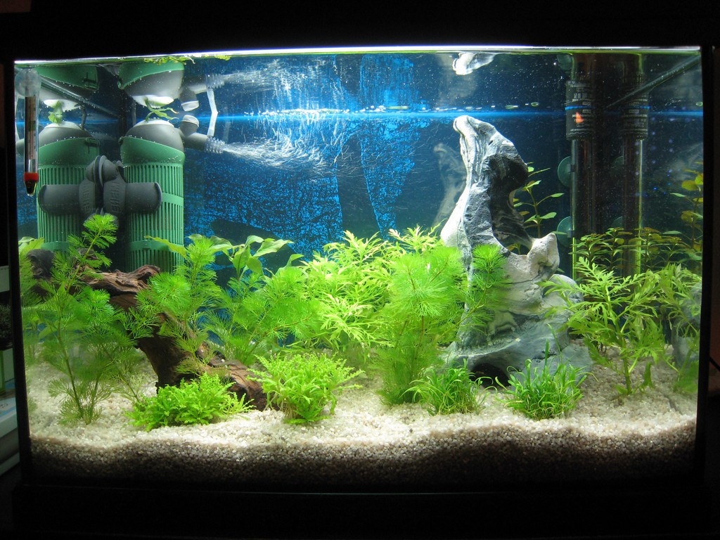 mon aquarium les plantes. Black Bedroom Furniture Sets. Home Design Ideas